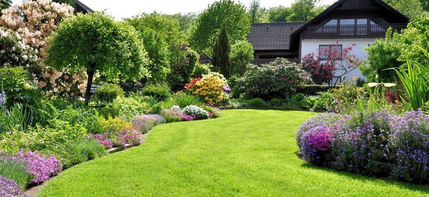 Создаем красивый газон на своем участке