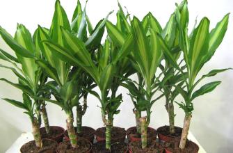 Древесные комнатные растения: 9 популярных видов