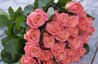 Букет роз: как выбрать подходящий и не ошибиться с цветом?